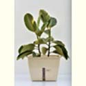 The Plant Air Purifier system