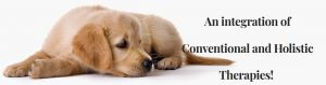 Dr. Jeanne Fowler offers Holistic Animal Health Talks by request