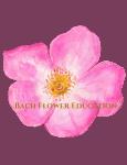 Bach Flower Education